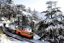 golden triangle tour shimla himachal