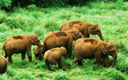 kerala tour packages golden triangle with kerala